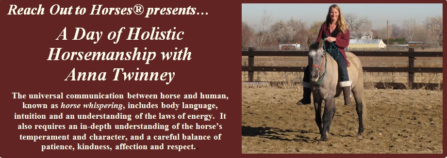 Holistic Horse Day